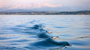 Waves at Lake Constance