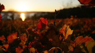 Autumn atmosphere at Lake Constance