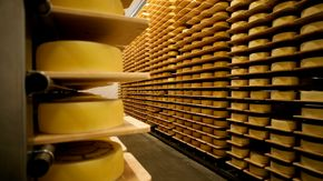 Appenzeller show cheese dairy