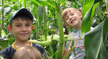 Gut Hügle corn maze in Ravensburg close to Lake Constance