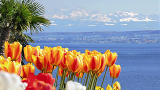 Mainau Island in spring at Lake Constance