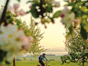 Cycling in Altnau at Lake Constance in Spring